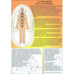 La Polarité dans le corps énergétique - Planche A4