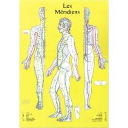 MERIDIENS CHRONOBIOENERGETICA - PLANCHE A4